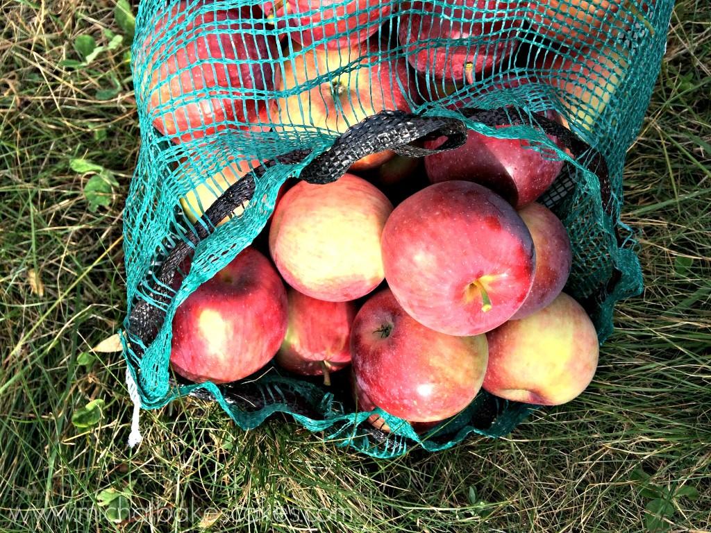 apples in bag